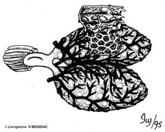 Pulmones Darth Vader, Science, Fictional Characters, Lungs, Amphibians, Gadgets, Science Comics