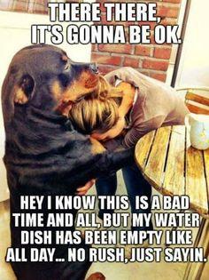 Perro humanos amistad