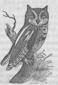 owl drawings - Google Search
