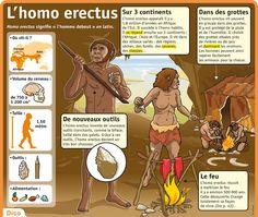 L'homo erectus