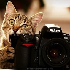 bad kitty! lol