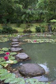 Bubbling lake with stepping stones and lillies, Terra Nostra Gardens, Furnas, São Miguel, Azores, Portugal