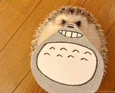 I NEED A #HEDGEHOG IN MY LIFE :(!