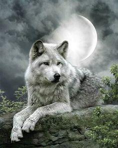 Wolf Spirit, Spirit Animal, Beautiful Wolves, Animals Beautiful, Animals And Pets, Cute Animals, Nature Animals, Wild Animals, Wolf 3d