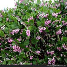 Sloped landscaping Ideas for teens Poisonous Plants, Rare Plants, Medicinal Plants, Landscaping A Slope, Mailbox Landscaping, Landscaping Ideas, Landscape Design, Garden Design, Fast Growing Shrubs