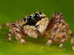 What Type of Spider are You? http://ift.tt/1oHBYda  #Animals Bugs Insects Nature Personality