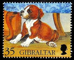 Boxer Dog Gibraltar Handmade Framed Postage Stamp Art 17844