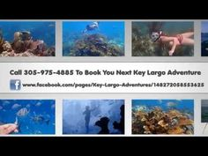 Snorkeling Key Largo - Snorkeling Adventure in Key Largo - (305) 975-4885 - http://www.florida-scubadiving.com/florida-scuba-diving/snorkeling-key-largo-snorkeling-adventure-in-key-largo-305-975-4885/