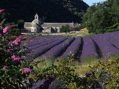 Abbaye de Sénanque in Provence. It's the ancient building often found in the background of iconic photos of lavender fields in France. Best Vacation Destinations, Best Vacations, Lavender Fields France, Visit Bordeaux, Haute Provence, Provence France, Beaux Villages, Visit France, High Road