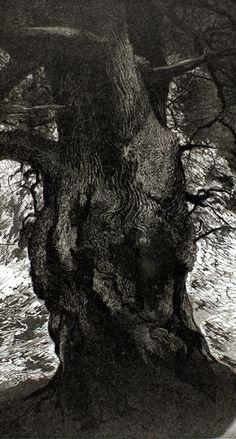 Tree Study 1  Paul Kershaw