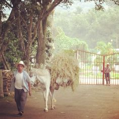 #guatemala #specialtycoffee #thrivefarmers #farmerdirect #knowwhogrows
