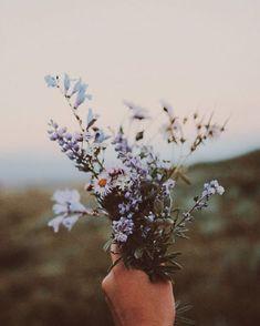 que lindo amor de flores silvestres - Spring Flowers, Wild Flowers, Spring Plants, Purple Flowers, My Flower, Beautiful Flowers, Flower Ideas, Imagen Natural, Flower Aesthetic