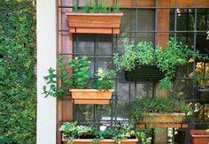 A moradora aproveitou a estrutura de ferro da janela para instalar as floreiras de plástico com hortelã, tomilho, cebolinha e outros temperos, que recebem o sol da manhã