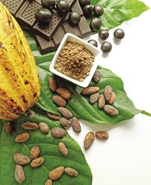 Fair Trade Chocolate is celebrating 10 years. We take the idea of Fair Trade a step further by working directly with the farmers.