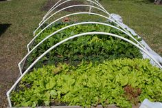 PVC pipe design for hoop house over raised beds