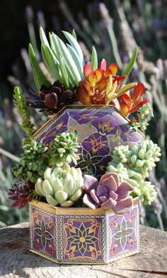 Succulent and sedum garden in colorful tin www.LoveChrystal.com