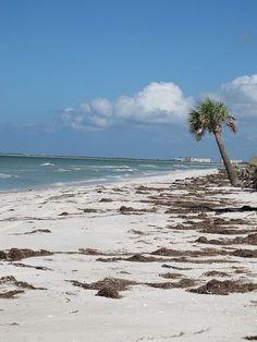 Honeymoon Island Dunedin Florida Beach Birds Blue Water Clouds Foilage Nature Ocean Sand Dunes Sea Sky Waves Fun