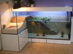 These turtles have a nicer apartment than I do..