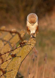 owl u dnt c me lalala