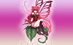 ☆Sweet Butterfly of Summer☆ wallpaper Wallpapers HD