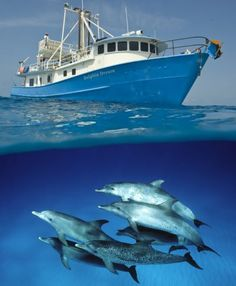 Scuba Diving With Dolphins   Dolphin Dream live aboard scuba diving in the Bahamas