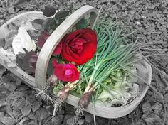 Onions and Roses by Sandra Clayton in KitchenCuisine on Sandra Clayton's Art and Photography