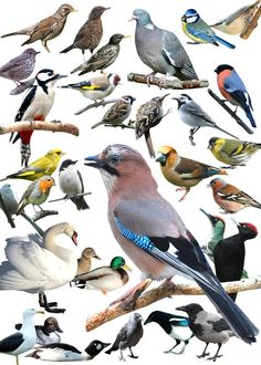 Ya Filthy Animal, Bird Theme, Animal Facts, Bird Drawings, Cute Friends, Zoology, Wild Birds, Landscape Art, Beautiful Birds