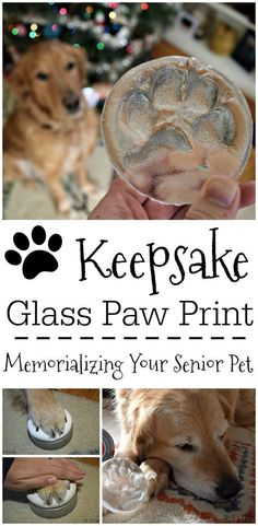 Looking for a lasting keepsake to remember an aging pet by? Hot Paws is a unique kit that allows you to make an impression of your dogs paw which will then be cast in glass!