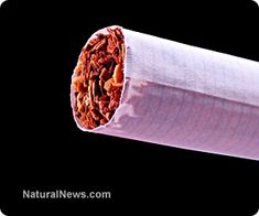Ninety percent of U.S. tobacco is GMO; hey smokers, you're smoking pesticide! http://www.naturalnews.com/040703_GMO_tobacco_chemicals_in_cigarettes.html