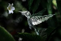 steampunk animal hummingbird