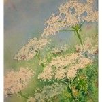 Several watercolor lessons here from Deb Watson - watercolor painting of queen anne's lace