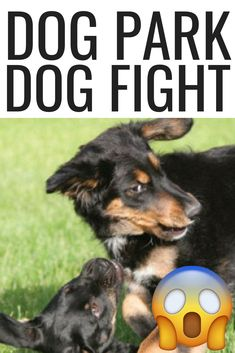 How To Deal With Aggressive Dog Behavior Problems - Dog Health Care and Information Dog Training Camp, Best Dog Training, Training Online, Agressive Dog Training, Dog Proposal, Hyper Dog, Dog Training Techniques, Aggressive Dog, Dog Fighting