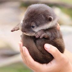 Baby otter. Just a hug !!