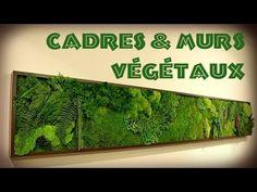 Cadres et murs végétaux