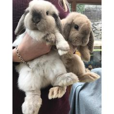 "2,479 mentions J'aime, 49 commentaires - #Pimousse #pimoussethebunny Minilop bunnies Teddy & Luna (@teddy.and.luna) sur Instagram : ""Have a hoppy Monday everybun! """