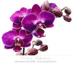 Purple Phanalopsis © 2013 ~ annamasonart.com #AnnaMasonNewSite