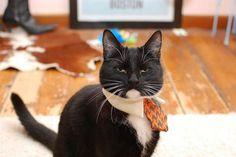 Serious Business Cat