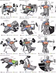 Full Body Workout Program, All Body Workout, Gym Workout Chart, Gym Workout Videos, Gym Workout For Beginners, Gym Workouts For Men, Weight Training Workouts, Big Biceps Workout, Traps Workout