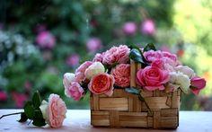 Розы, лукошко, корзинка, c elena di guardo