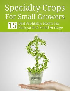 Top 10 Questions About Growing Microgreens For Profit