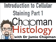 3 Min Histology Intro To Cell Staining 1 - YouTube