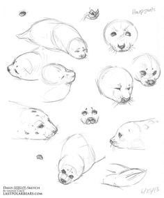 Exciting Learn To Draw Animals Ideas. Exquisite Learn To Draw Animals Ideas. Animal Sketches, Animal Drawings, Art Sketches, Cartoon Drawings, Cute Drawings, Anime Animals, Draw Animals, Different Forms Of Art, Nature Sketch