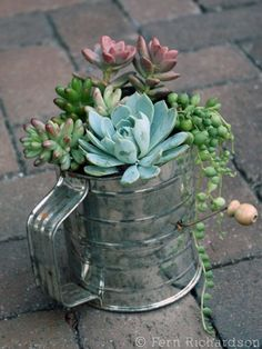 Succulent Gift Ideas Container Gardening- I love this! Would be so cute in one of those garden windows in a kitchen!Container Gardening- I love this! Would be so cute in one of those garden windows in a kitchen! Succulents In Containers, Cacti And Succulents, Planting Succulents, Planting Flowers, Water Containers, Flowers Garden, Succulent Gifts, Succulent Gardening, Container Gardening
