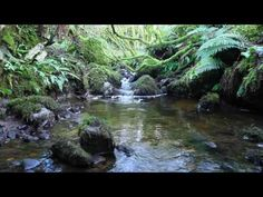 1 Hour Nature Sounds Without Birdsong Sound of Water-Relaxation Meditation-Forest Waterfall-Relax Relaxation Meditation, Meditation Music, How To Get Sleep, How To Do Yoga, Waterfall Sounds, Forest Waterfall, Nature Gif, Nature Videos, Emotional Awareness