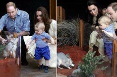 George de Cambridge, un pequeño Príncipe valiente rodeado de animales australianos