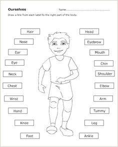 template outline body female medical human resume myoscommercetemplates