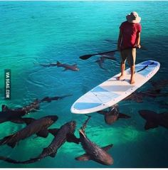 They are nurse sharks. Completely harmless.