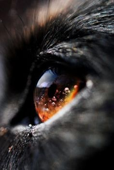 Awesome wolf eye