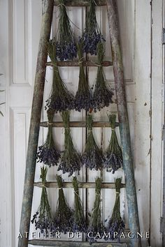 Wooden Ladder as a herb drying rack
