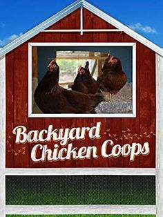 Imagine being able to pick up farm fresh eggs from your backyard! For some, it's no longer just a fantasy. Chicken cooping has taken off in backyards all over the country, not only bringing food production closer to home, but enlightening lives with charming, quirky pets! #chickencoops #amazon #backyardchicken #homesteading #gentlemanpirateclub Small Chicken Coops, Backyard Chicken Coops, Chickens Backyard, Keeping Chickens, Chicken Breeds, Prime Video, Homesteading, Amazon, Backyards